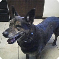 Adopt A Pet :: Junior - Kouts, IN