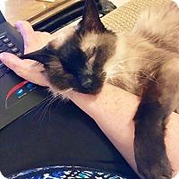 Adopt A Pet :: Ted - Chaska, MN