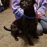 Adopt A Pet :: Monty K91-8605 - Thibodaux, LA