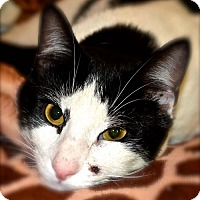 Adopt A Pet :: Russell - Baltimore, MD