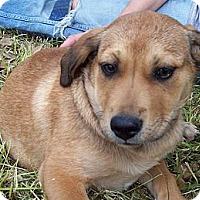 Adopt A Pet :: CASTLE - Glastonbury, CT