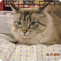 Adopt A Pet :: Maya - Riverside, RI