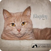 Adopt A Pet :: Kingley 5516 - Fort Mill, SC