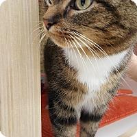 Adopt A Pet :: DeeDee - Stafford, VA