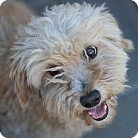 Adopt A Pet :: Nicky - Canoga Park, CA