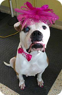 Boxer Dog for adoption in Garden City, Michigan - Roz