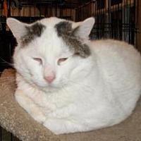 Adopt A Pet :: BooBoo - Lacon, IL
