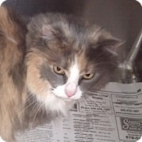 Adopt A Pet :: Pansy - Germantown, MD