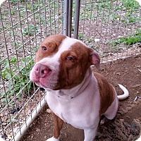 Adopt A Pet :: MA Bell - Kingsland, TX
