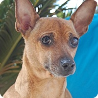 Adopt A Pet :: Wilma - Las Vegas, NV