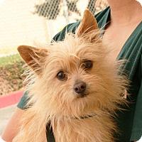 Adopt A Pet :: Yoda - Palmdale, CA