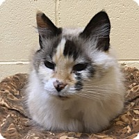 Adopt A Pet :: Starr - Huntsville, AL