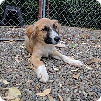 Adopt A Pet :: Rocky - Pleasanton, CA