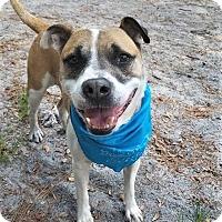 Adopt A Pet :: Max - Umatilla, FL
