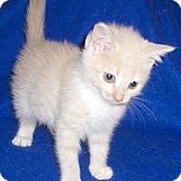 Adopt A Pet :: Sissy - Richmond, VA