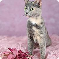 Adopt A Pet :: Coco - Eagan, MN