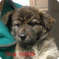 Adopt A Pet :: Ona - baltimore, MD