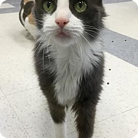 Adopt A Pet :: Misha - Webster, MA