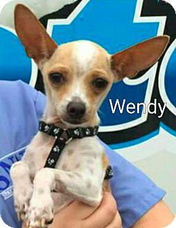 Chihuahua Mix Dog for adoption in Encinitas (San Diego), California - Wendy