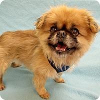 Adopt A Pet :: MOPSIE - Boston, MA