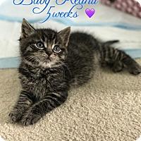 Adopt A Pet :: Keanu - Island Park, NY