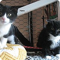 Adopt A Pet :: Hans - Portland, OR