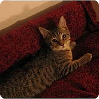 Adopt A Pet :: Pumpkin - Greenville, SC