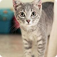 Adopt A Pet :: Skye - Shelton, WA