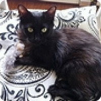 Adopt A Pet :: Gwendelyn - Vancouver, BC