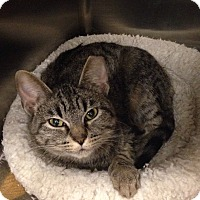Adopt A Pet :: Frost - Muncie, IN