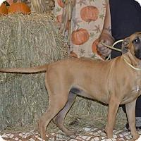 Adopt A Pet :: Mihina - Lima, OH