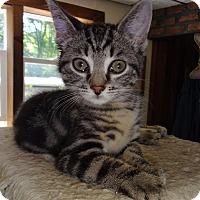 Adopt A Pet :: Desmond - N. Billerica, MA