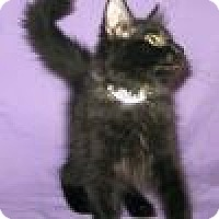 Adopt A Pet :: Alvin - Powell, OH