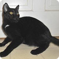 Adopt A Pet :: Leonard - Chattanooga, TN