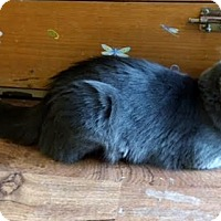 Adopt A Pet :: Smokey - Wilton, NY