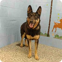 German Shepherd Dog Mix Dog for adoption in San Bernardino, California - GIRLIE