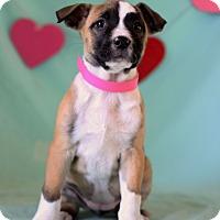 Adopt A Pet :: Fifi - Waldorf, MD