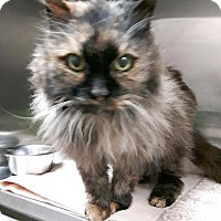 Adopt A Pet :: Dolly - Leamington, ON
