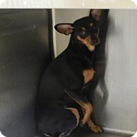 Adopt A Pet :: George - Pikeville, KY