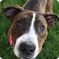 Adopt A Pet :: Roxi - Fayette, MO