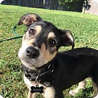 Adopt A Pet :: Lobo - Baltimore, MD