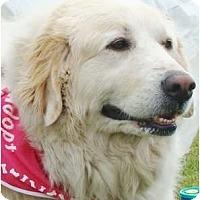 Adopt A Pet :: Mona - Oklahoma City, OK