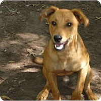 Adopt A Pet :: Marley - Pointblank, TX