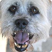 Adopt A Pet :: Ernie - Denver, CO