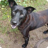 Adopt A Pet :: Sergio - New Orleans, LA