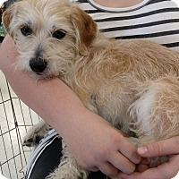 Adopt A Pet :: jack - Simi Valley, CA