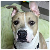 Adopt A Pet :: Henry - Forked River, NJ