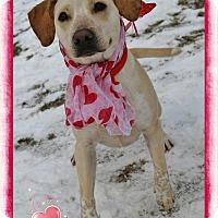 Adopt A Pet :: Daisy - Shippenville, PA