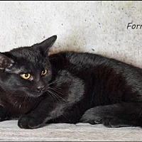 Adopt A Pet :: Forest - Trexlertown, PA