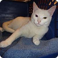 Adopt A Pet :: Anabelle - Wildomar, CA